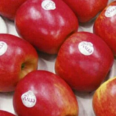 Ambrosia Apples from New Zealand (sz 72)