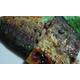 Grilled mackerel fish with salt sauce