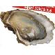 Oyster sushi